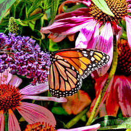 Allen Beatty - Monarch Butterfly