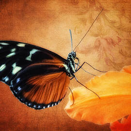 Tom Mc Nemar - Monarch Butterfly on an Orchid Petal
