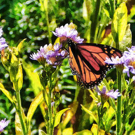 Susan Savad - Monarch Butterfly on Purple Wildflower