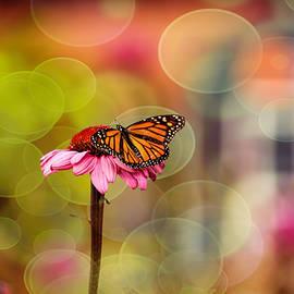Geraldine Scull - Monarch butterfly on zinnia