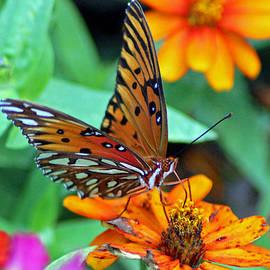 Cynthia Guinn - Monarch Butterfly Resting