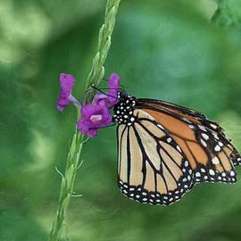 Kim Hojnacki - Monarch In The Garden