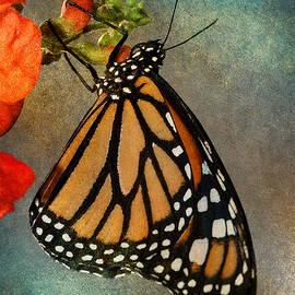 WB Johnston - Monarch