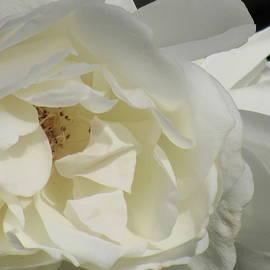 Barbara Ebeling - Monastery White