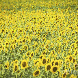 Janice Rae Pariza - Monet Sunflower Field