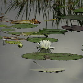 Christiane Schulze Art And Photography - Monet