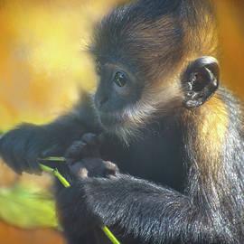Lynn Bauer - Monkey Business
