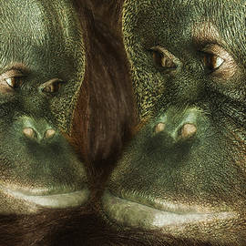 Jack Zulli - Monkey Love