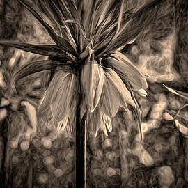 Leif Sohlman - Monochrome artistic painterly crown-imperial