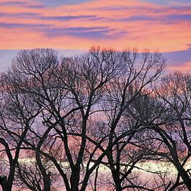 Jennie Marie Schell - Montana Sunrise Tree Silhouette