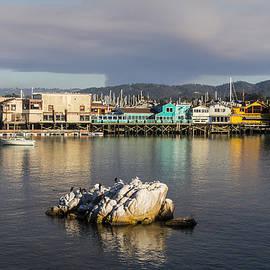 Venetia Featherstone-Witty - Monterey Bay, California