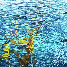 Christopher Christoforou Shiny Soul - Monterey Fish - Calfornia