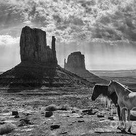 Priscilla Burgers - Monument Valley Horses