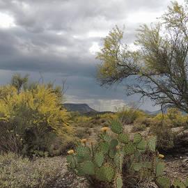 Gordon Beck - Moody Desert