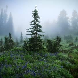 Lynn Hopwood - Moody Myrtle Falls Trail at Mount Rainier