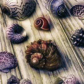Moody Sea Shells  - Garry Gay