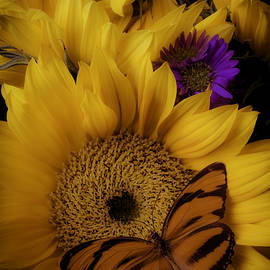 Moody Sunflower - Garry Gay