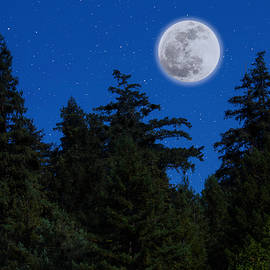 Moon Above Tree Line - Garry Gay