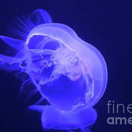 Moon Jellyfish-9648