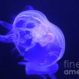 Moon Jellyfish-9649