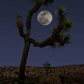 David Kehrli - Moon over Joshua Tree National Park