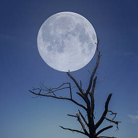 Moon Stuck In A Tree
