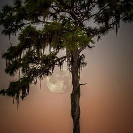 Ronald Kotinsky - Moonlit Pine