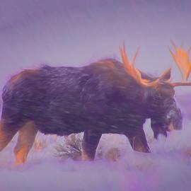 Michael Balen - Moose in a Blizzard