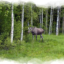 Torfinn Johannessen - Moose