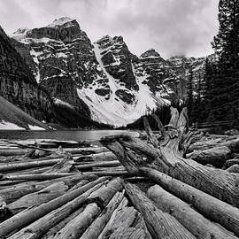 Stephen Stookey - Moraine Lake Driftwood No 2