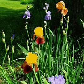 Marsha Heiken - More Backyard Flowers