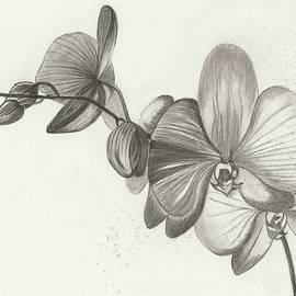 Wraymona Low - More Flowers