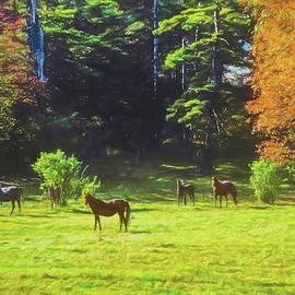 Rusty Smith - Morgan Horses in autumn pasture