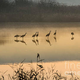 Gal Gross - Morning by the lake