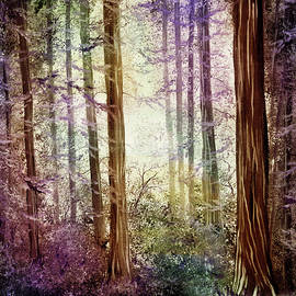 Morning Colors on the Redwoods - Laura Iverson