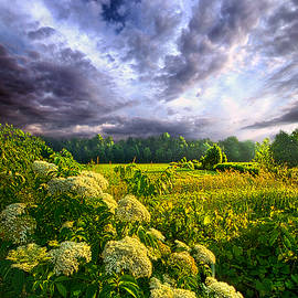 Phil Koch - Morning Creation