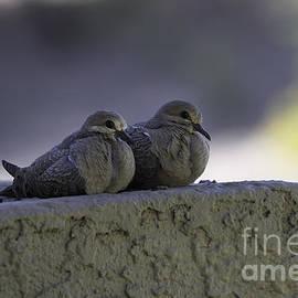 Anne Rodkin - Morning Doves