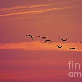 Nina Stavlund - Morning Flight..