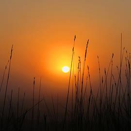 Dianne Cowen - Morning Fog