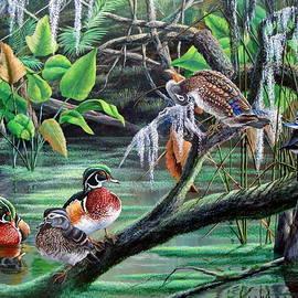 Daniel Butler - Morning Glory- Wood Ducks