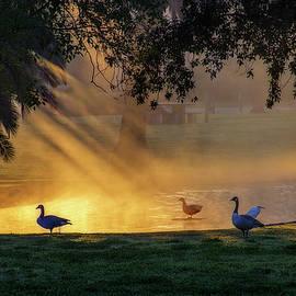 Terry Davis - Morning Gold