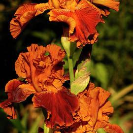 ArtissiMo Photography - Morning Orange