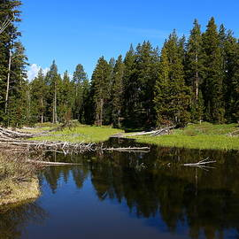 Christiane Schulze Art And Photography - Morning Serenity At The Yellowstone NP