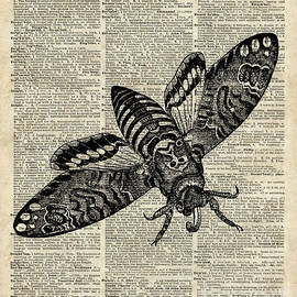 Jacob Kuch - Moth over Dictionary Page