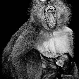 Henry Jager - Mother and Baby suckling - Macaque