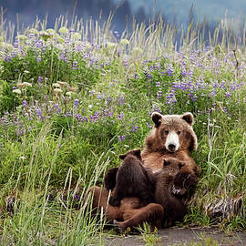 Linda D Lester - Mother Brown Bear Nursing