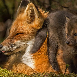 Steve Dunsford - Mother Fox and Kit