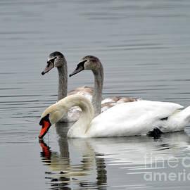 Linda Troski - Mother Swan and Childern