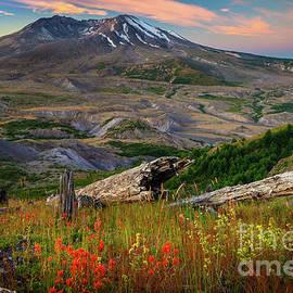 Mount St Helens Paintbrush - Inge Johnsson