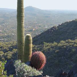 Gordon Beck - Mountain Cactus